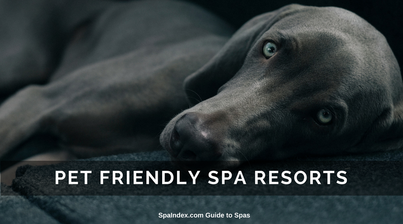 Find Pet Friendly Spa Resorts