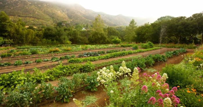 Organic Produce grown on the property - Golden Door Destination Spa, Escondido, California