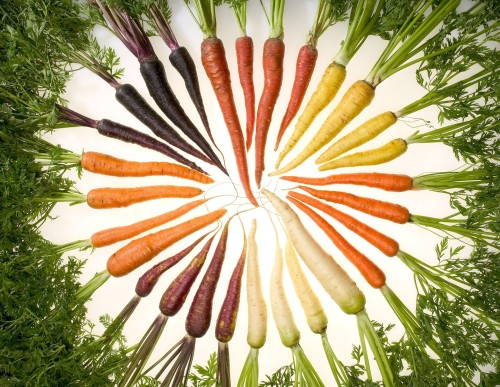 Carrots in Circle