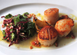 Seared Scallops and Radicchio Salad