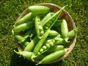 Peas Fresh