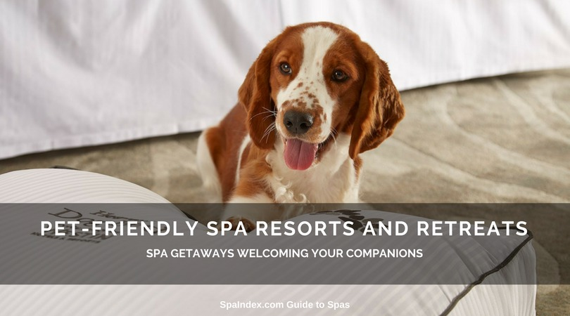Pet Friendly Spas Hotels And Retreats