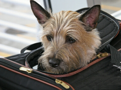 Best Pet Friendly Hotels, Spas, Resorts and Retreats